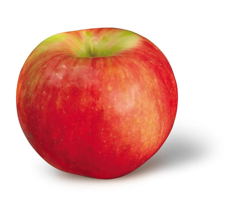 Spartan Apple