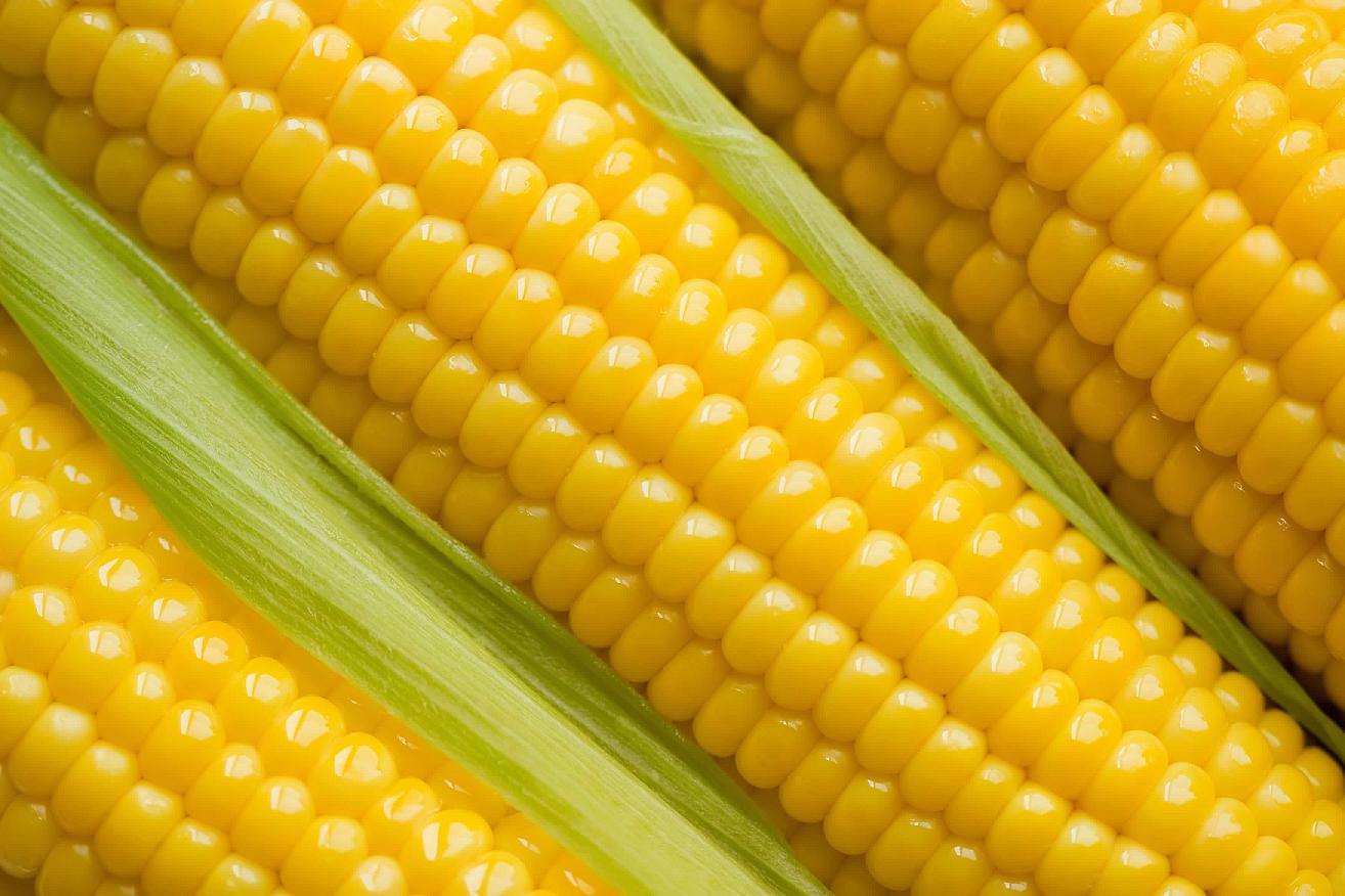 Corn 3 small